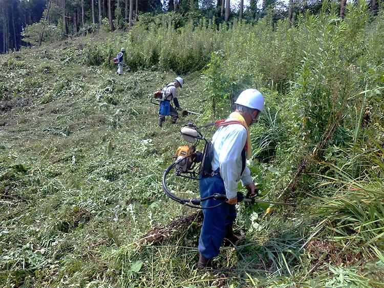 下刈り作業